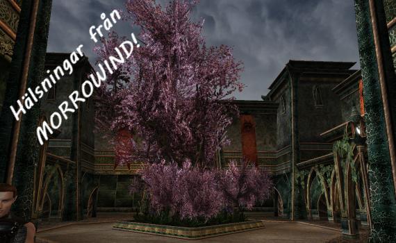 Ok, tekniskt sett inte från Morrowind men det ingår i spelet.